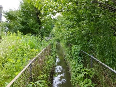 東金円筒分水工から流れる用水路