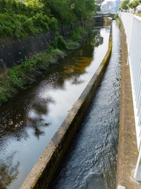 旧小鮎川と河道内を並流する西部用水分水路