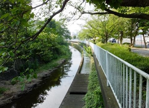 旧小鮎川河道内を流れる西部用水連絡水路
