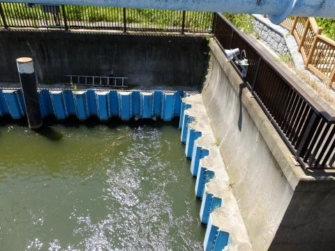 小松橋上流の放流水
