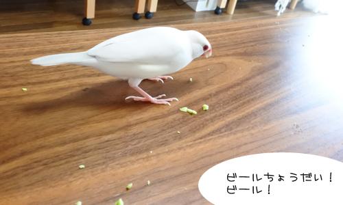 枝豆 & イロイロ_1