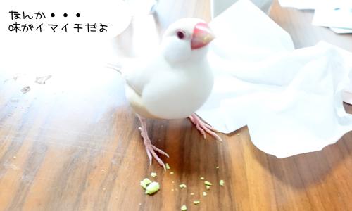 枝豆 & イロイロ_2