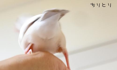枝豆 & イロイロ_4