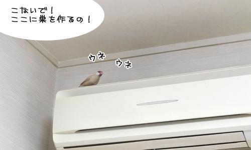 文鳥たちの様子_4