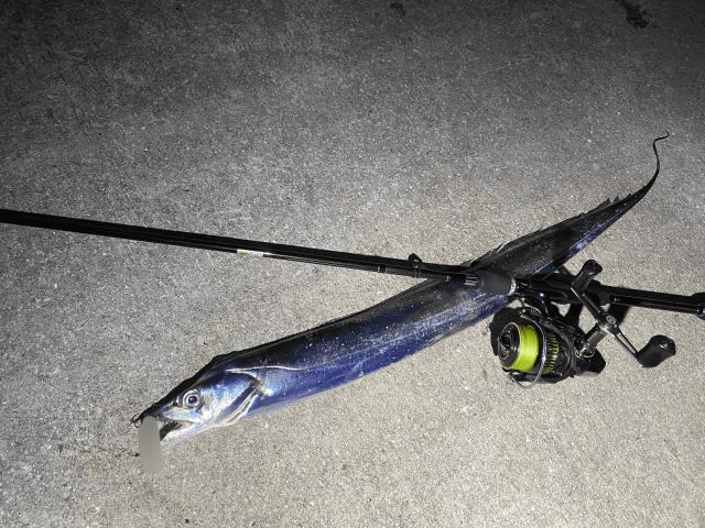20191227001_太刀魚