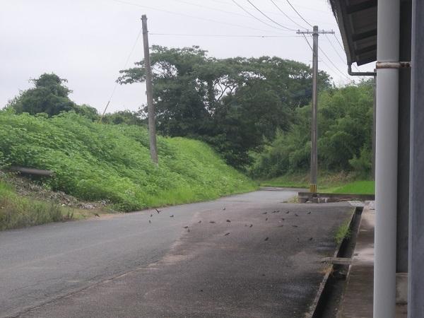 DSCN58601.jpg