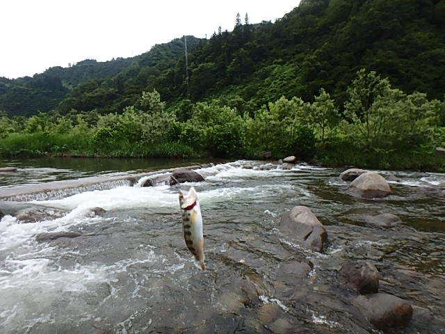 朝から昼まで釜川8