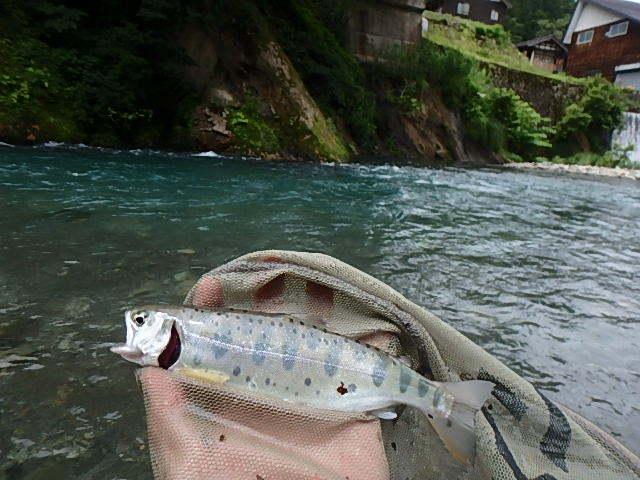 朝から昼まで釜川ついでに清津川3