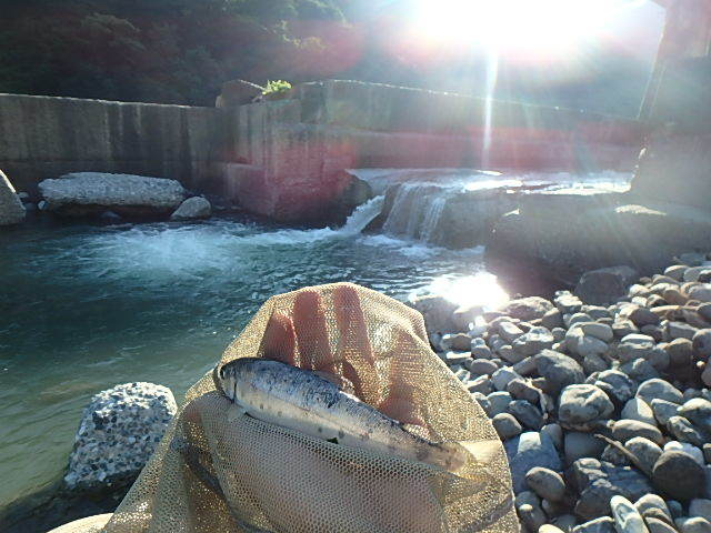 泥の小滝川から姫川に移動1