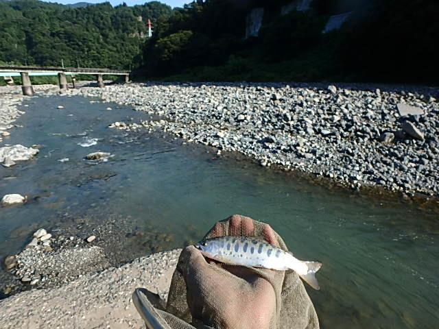 泥の小滝川から姫川に移動3