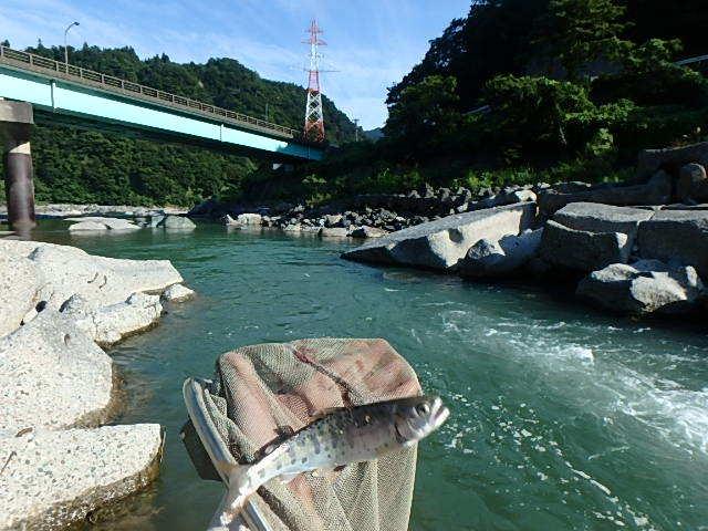泥の小滝川から姫川に移動4