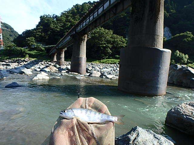 泥の小滝川から姫川に移動5