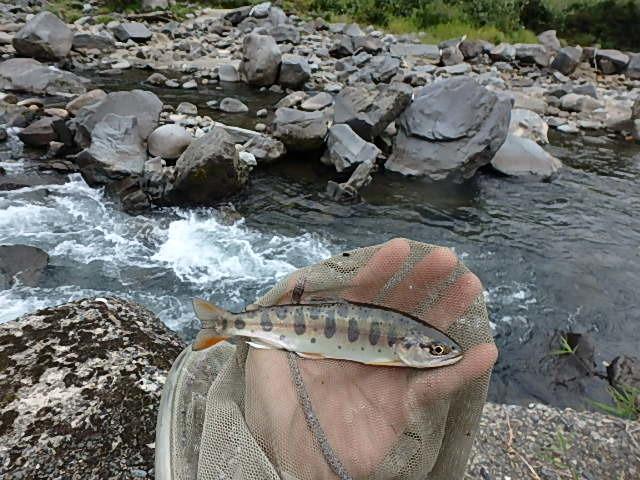 2019最後の渓流釣りは中津川4
