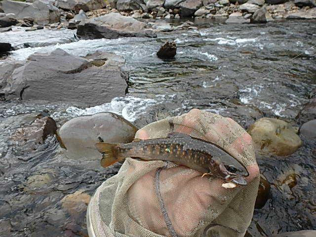 2019最後の渓流釣りは中津川5