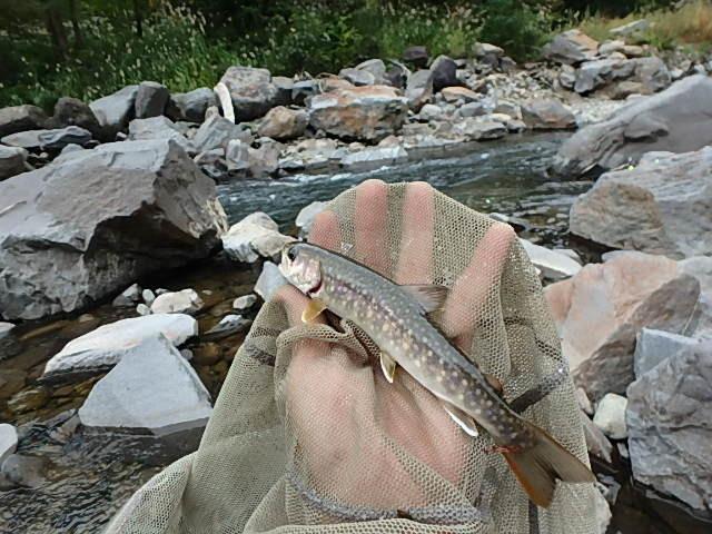 2019最後の渓流釣りは中津川12