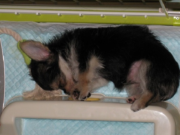 2そら 生後2ヶ月 トイレの隙間で寝る 2011.8.21