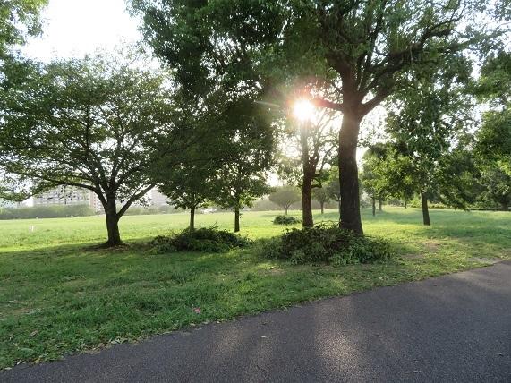 2A06 樹の枝が落ちる 0909