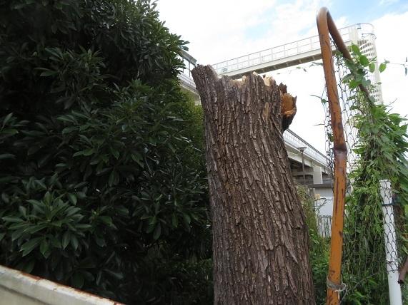 5C01 高速下の大木 台風で倒木 0922