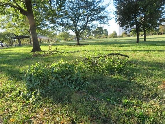 6D01 公園の樹の枝 1013