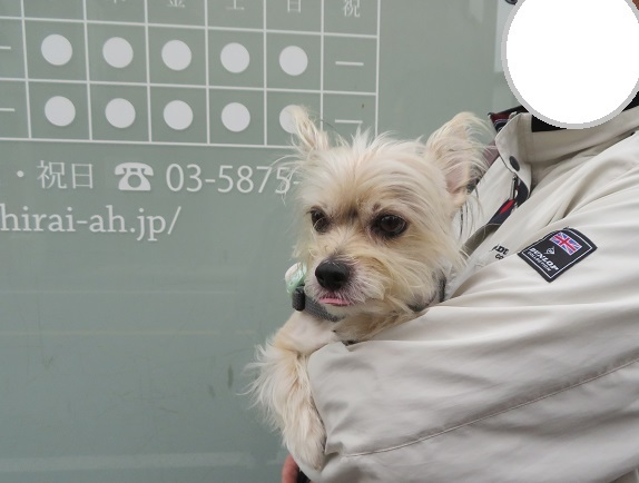 3C04 平井動物病院 1017