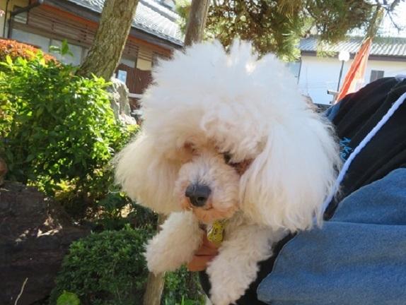1E01S  七沢荘の看板犬4代目 1115