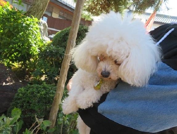 2E02S 七沢荘の看板犬4代目 1115