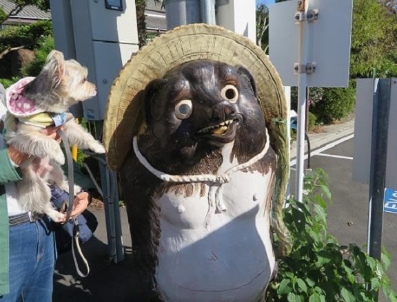 1F03  タヌキ   1115