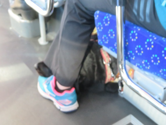5G04 盲導犬 1115