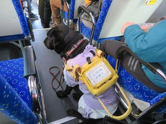 6G05 盲導犬 1115
