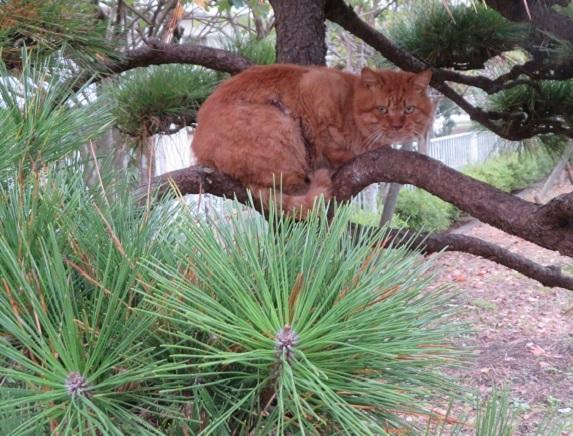 6D01 睨む猫 1211
