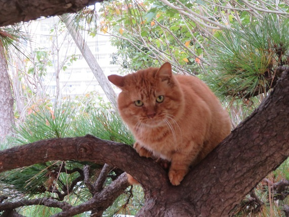 7D03 睨む猫 1211