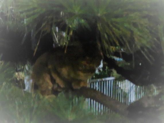2E01 夜の猫 1211 (2)