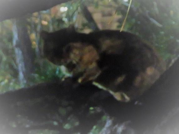 4E03 夜の猫 1211 (2)