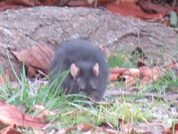 5A07S 鼠 1213