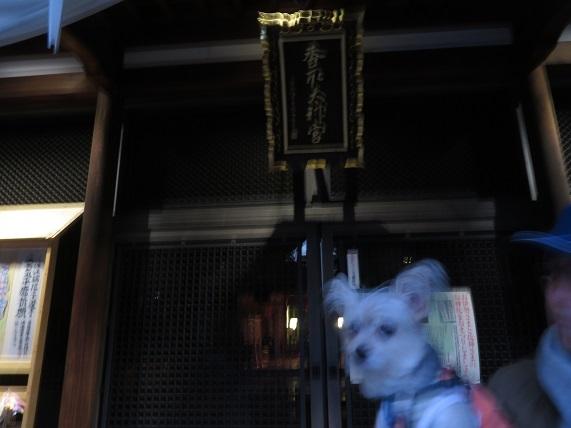 1D02  亀戸香取神社 0113