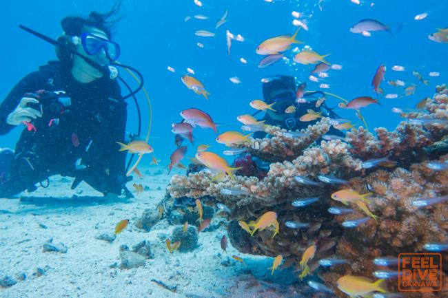水納島が楽しい季節