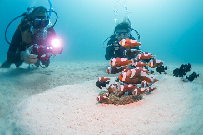 モトブの海はサンタちゃんがいっぱい!