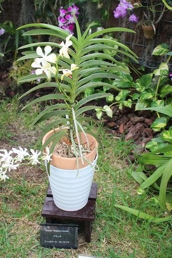IMG_0385アランダ シンガポールサンライズ