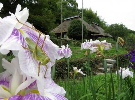 男の子焼・ウマノスズクサ・川下り 2019-06-08 107