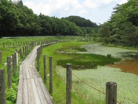 下田渡しと樫原湿原 2019-06-05 047
