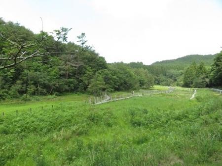 下田渡しと樫原湿原 2019-06-05 001