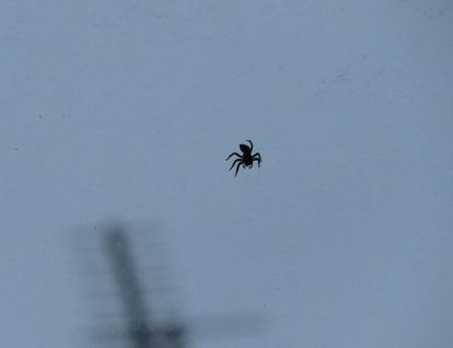 蜘蛛 2019-07-01 002
