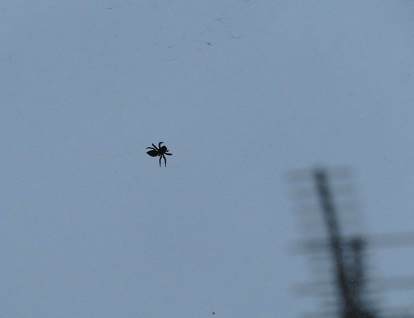 蜘蛛 2019-07-01 001