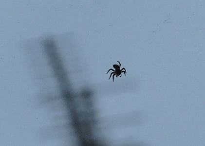 蜘蛛 2019-07-01 003