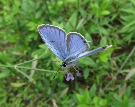 清水の昆虫達 2019-07-04 027