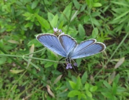 清水の昆虫達 2019-07-04 023