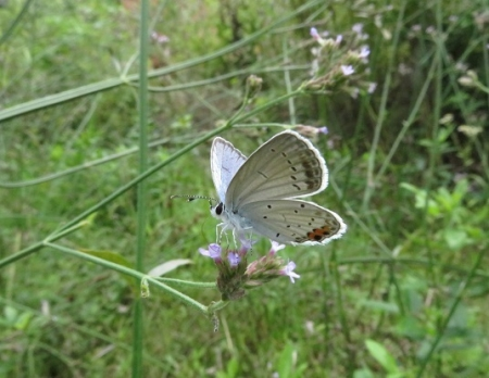 清水の昆虫達 2019-07-04 020