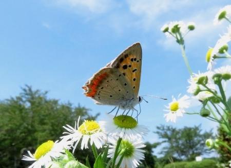 清水の昆虫達 2019-07-04 094