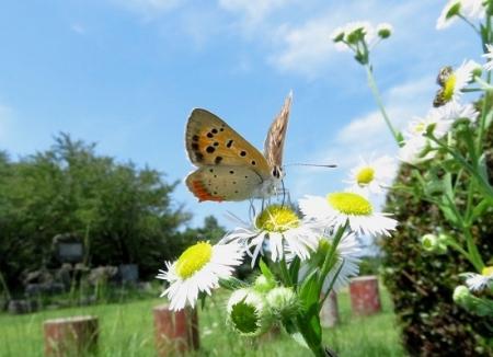 清水の昆虫達 2019-07-04 092