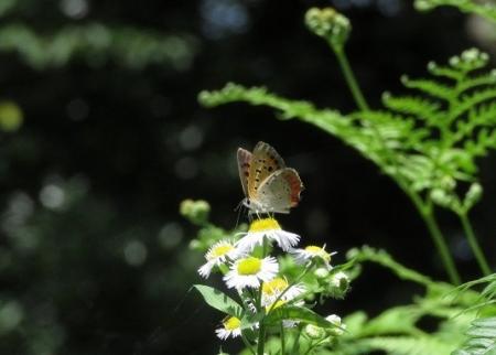 清水の昆虫達 2019-07-04 100
